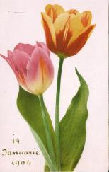 1904_2b